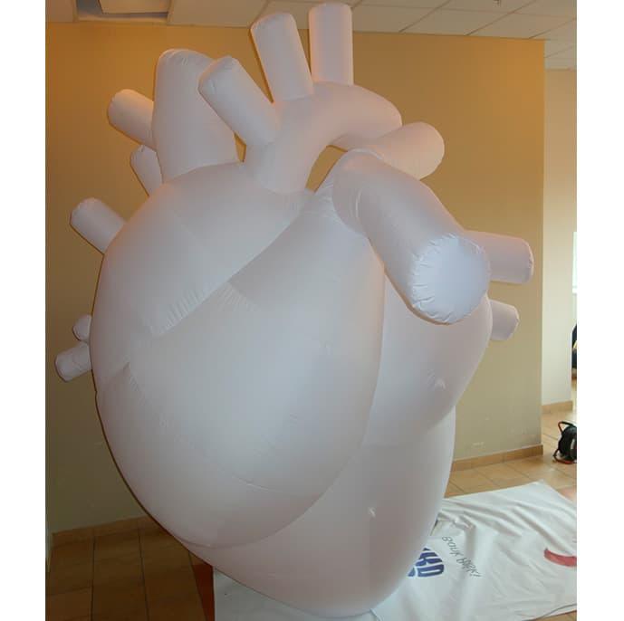 anatomic_heart_inflatable